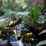 Jambo Guest House Garden